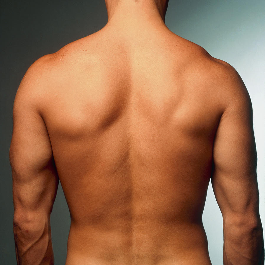 Torso Photograph - Naked Torso (back View) Of An Athletic Young Man by Phil