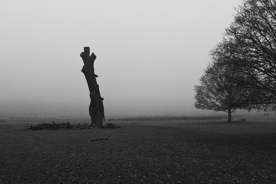 Naked Tree Photograph