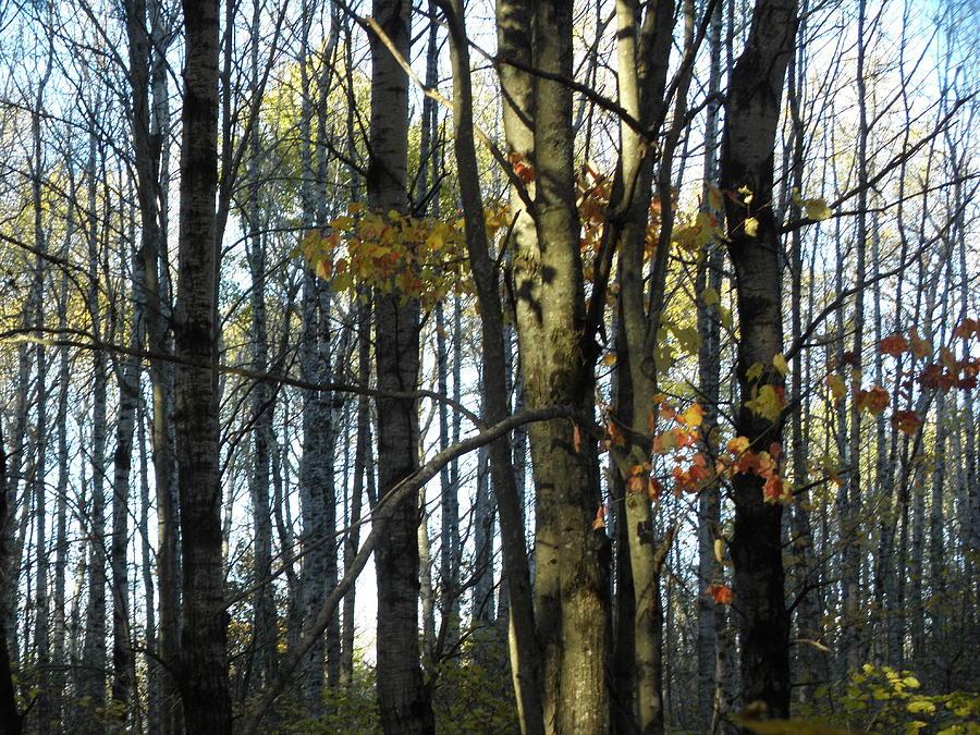 Tree Photograph - Naked Trees by Karen Jordan
