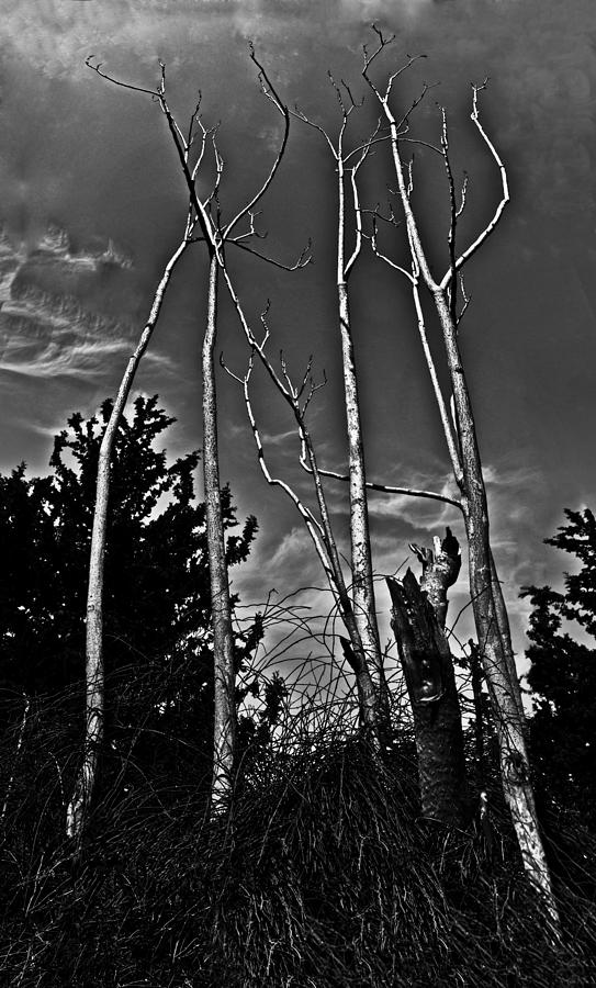 Trees Photograph - Naked Trees by Nadya Ost