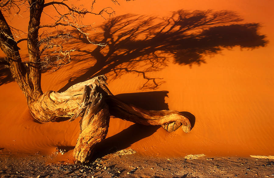 Framed Pyrography - Namibia 2 by Mauro Celotti