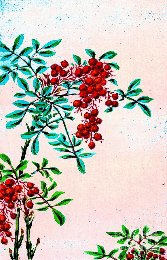 Nandina Bush With Red Berries 1870 Photograph By Padre Art