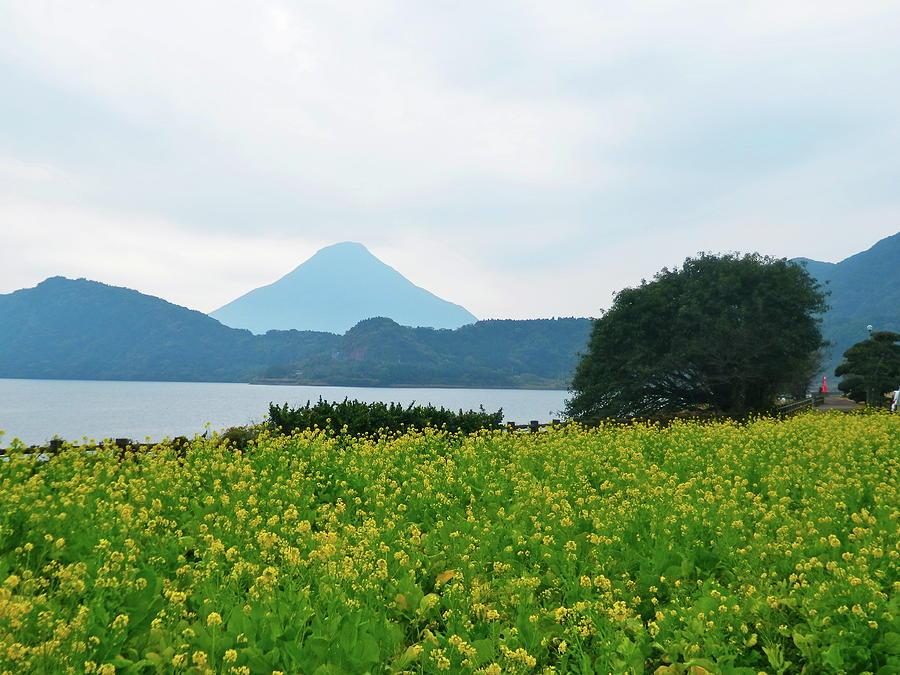 Horizontal Photograph - Nanohana (rape Blossoms) by Kurosaki San