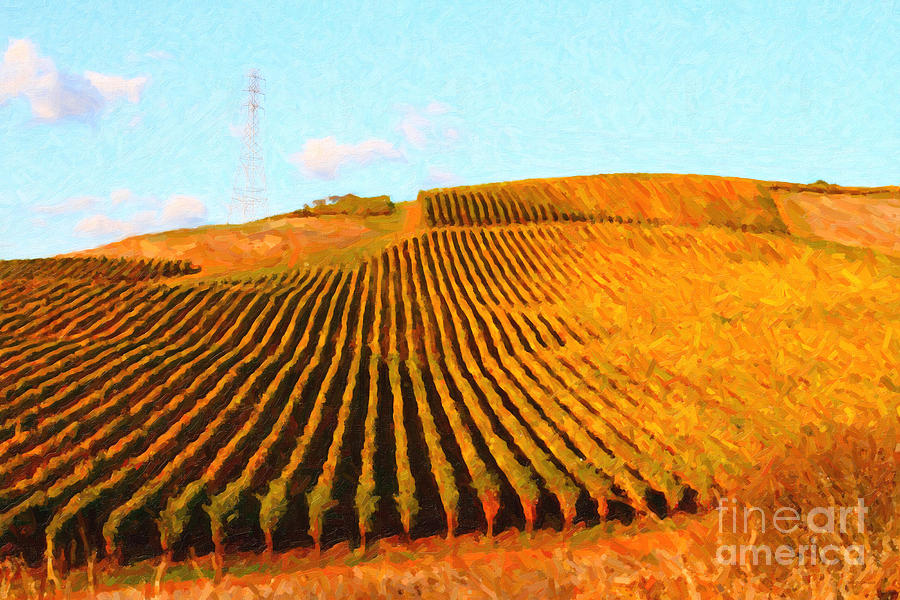 Landscape Photograph - Napa Valley Vineyard by Wingsdomain Art and Photography