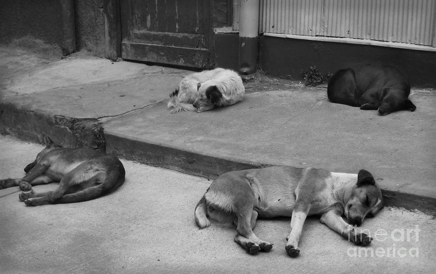 Dogs Photograph - Napping Friends In Valparaiso by Camilla Brattemark
