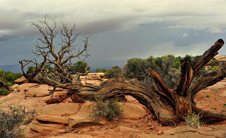 Tree Photograph - Narley Tree by Marty Koch