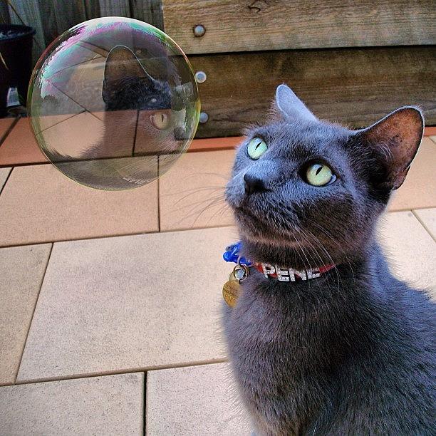 Cat Photograph - Natural Enemies by Cameron Bentley