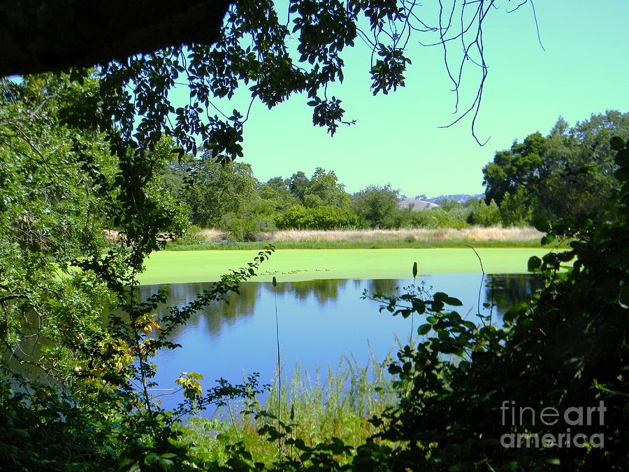 Pond Photograph - Natural Layers by DJ Laughlin