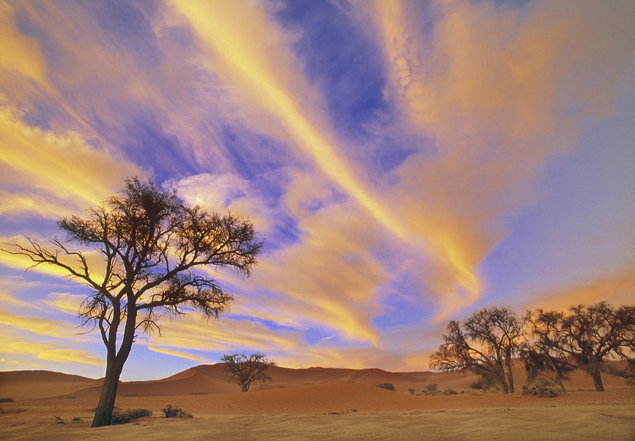 Natural Moments Photography Camelthorn Photograph By