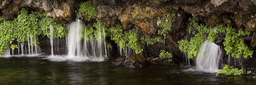 natural spring photograph by skye fassett
