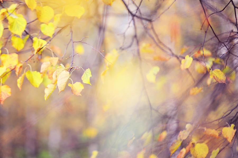 Autumn Photograph - Natural Watercolor Of Autumn by Jenny Rainbow