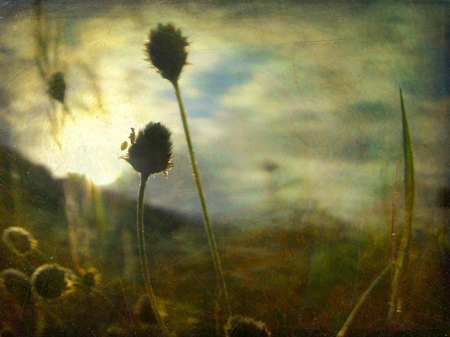 Digital Photograph - Nature #11 by Alfredo Gonzalez