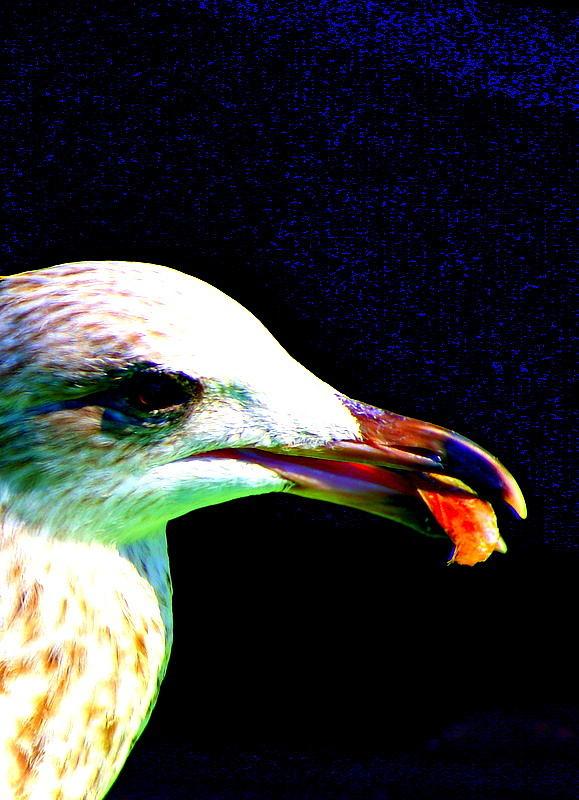 Bird Photograph - Nature by Amanda Pillet