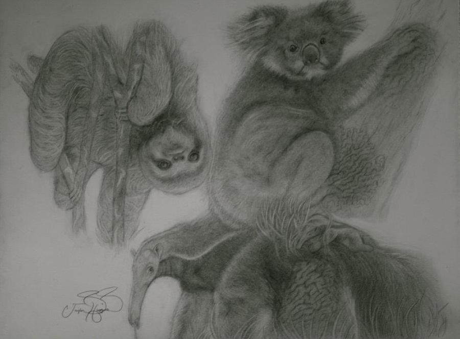 Sloth Ant Eater Koala Bear Lazy Moss  Drawing - Nature Of Laziness by Taylor Higgins