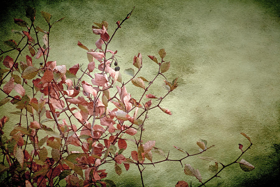 Nature Photograph - Nature On Parade by Bonnie Bruno