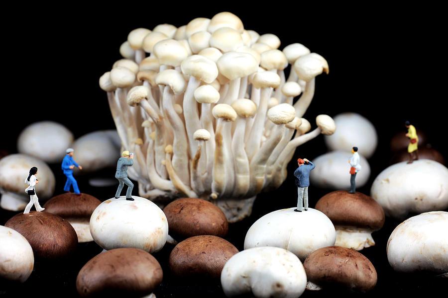 Mushroom Photograph - Nature Photographers Shooting Adventure by Paul Ge