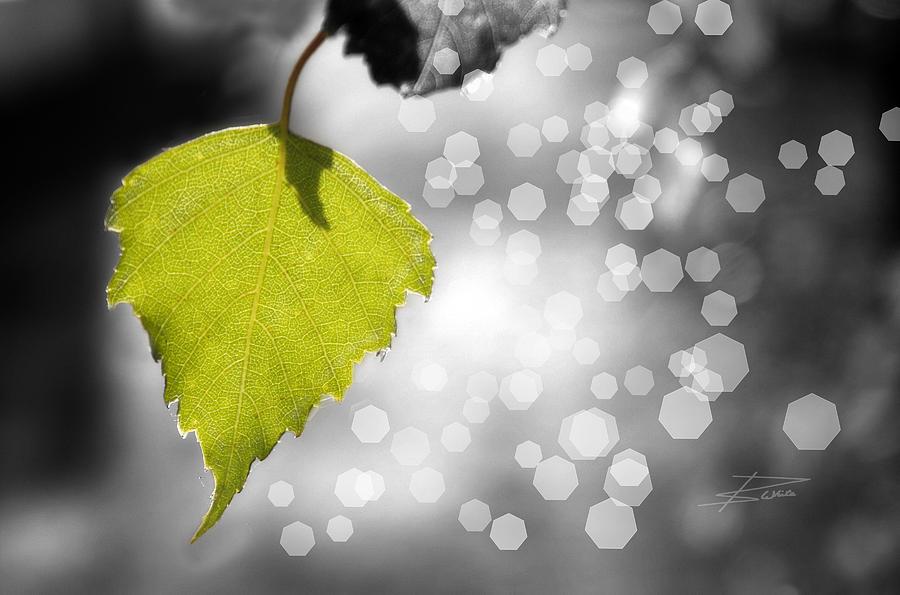 Shining Photograph - Nature Shines by Barbara  White