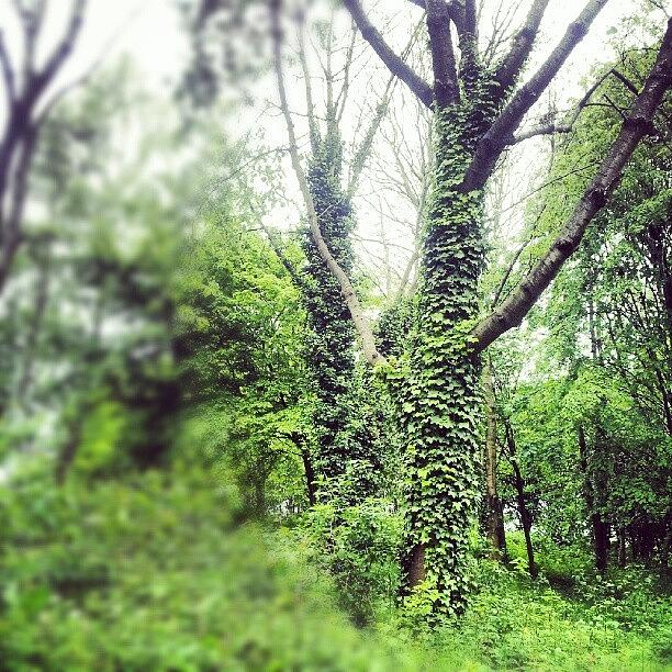 England Photograph - #nature #trees #tree #green #salford by Abdelrahman Alawwad