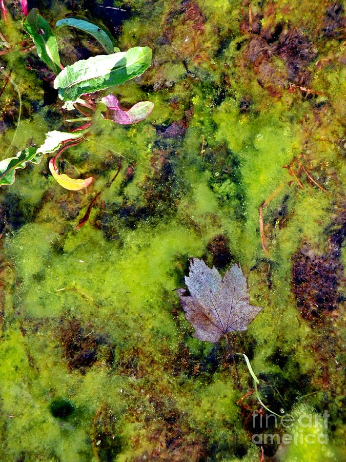 Pond Photograph - Natures Absract by Christian Mattison