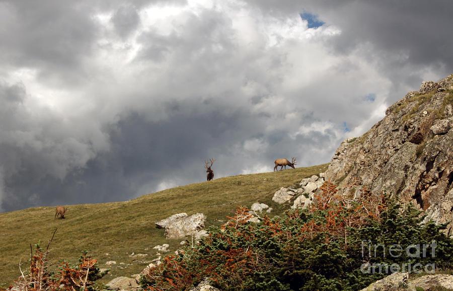 Nature Photograph - Natures Bounty by Juan Romagosa