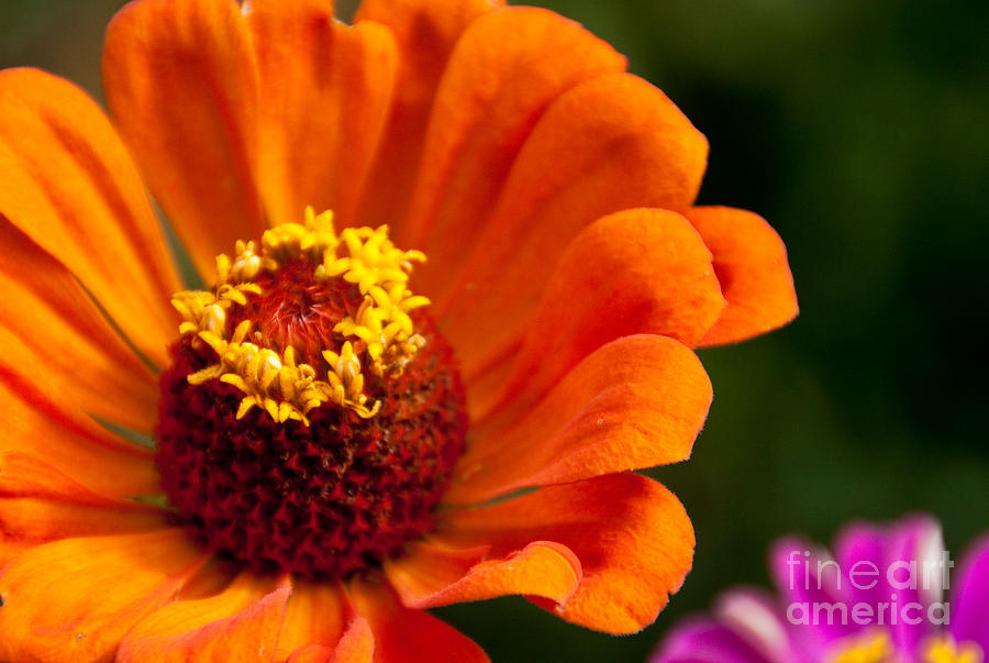 Flower Photograph - Natures Color  by Dana Kern