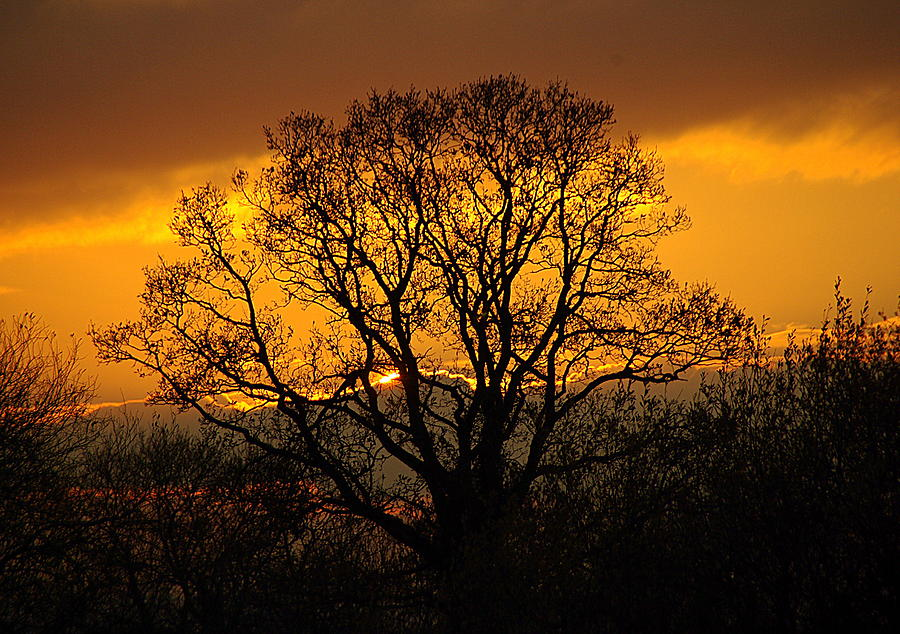 Irish Photograph - Natures Gold by Cat Shatwell