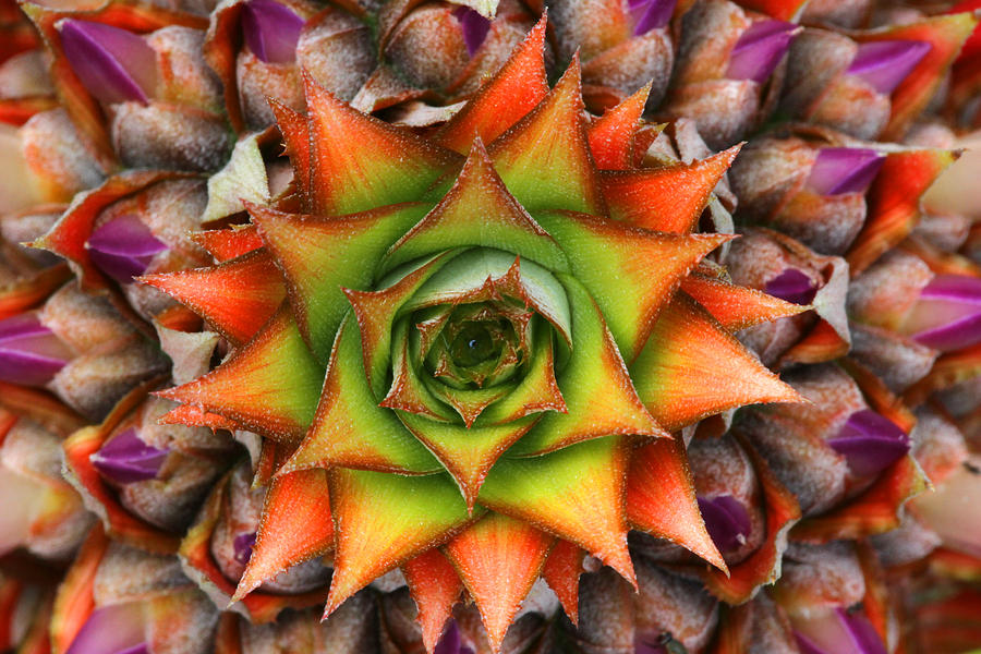 Rainbow Flower Photograph - Natures Kaleidoscope by Jose Rodriguez