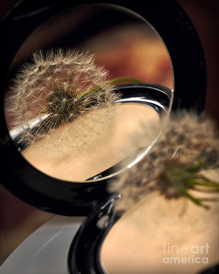 Beauty Photograph - Natures Powder Puff by Jane Brack