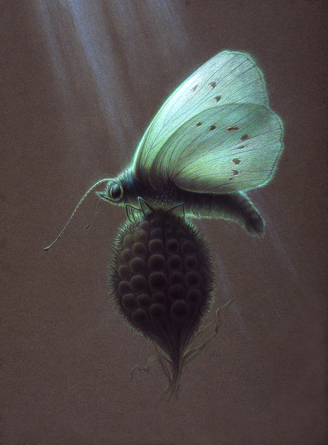 Butterfly Painting - Nausithous by Shawn Kawa