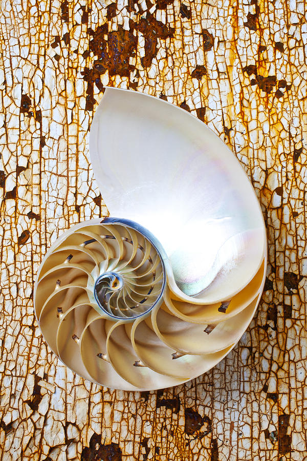 Nautilus Shell Photograph - Nautilus Shell On Rusty Table by Garry Gay
