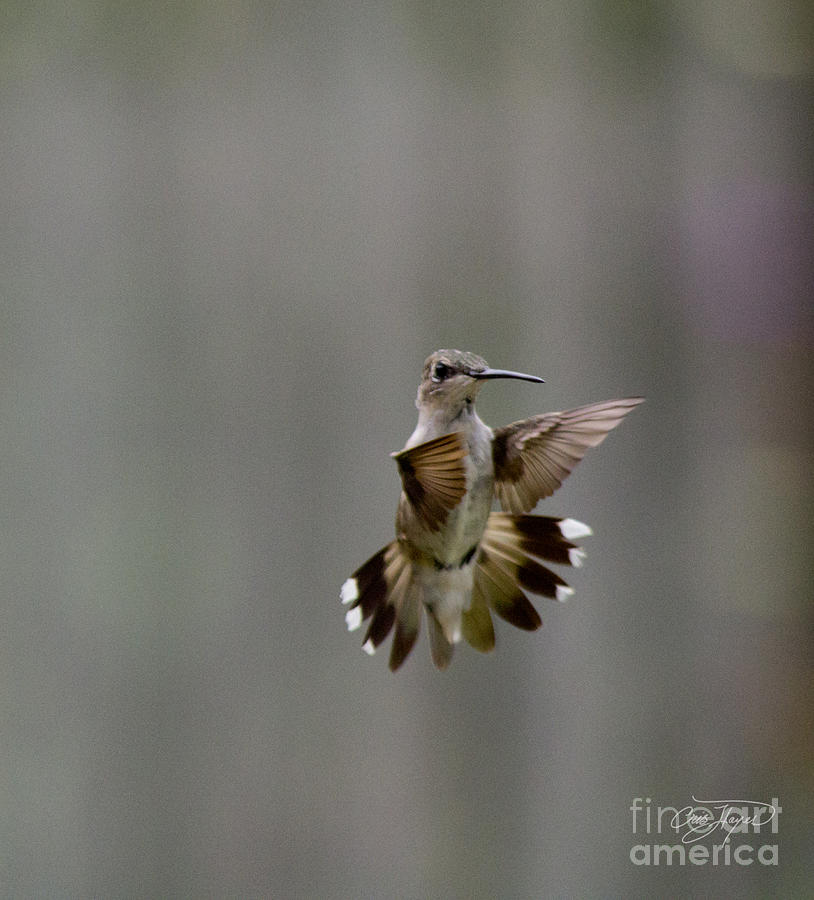 Nature Photograph - Nectar Defense by Cris Hayes