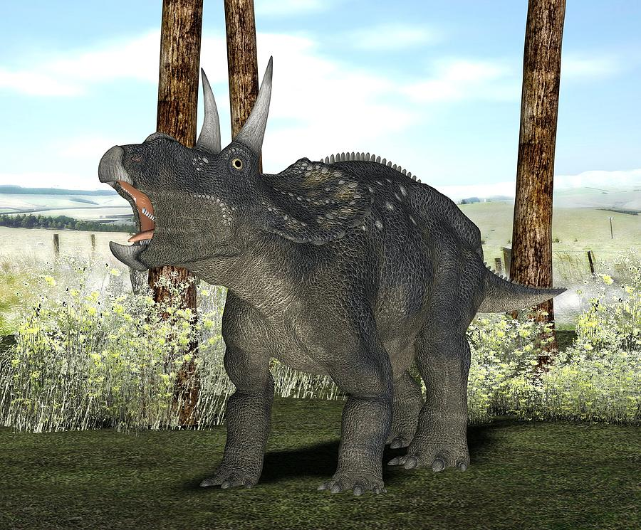 Diceratops Photograph - Nedoceratops Dinosaur, Artwork by Friedrich Saurer