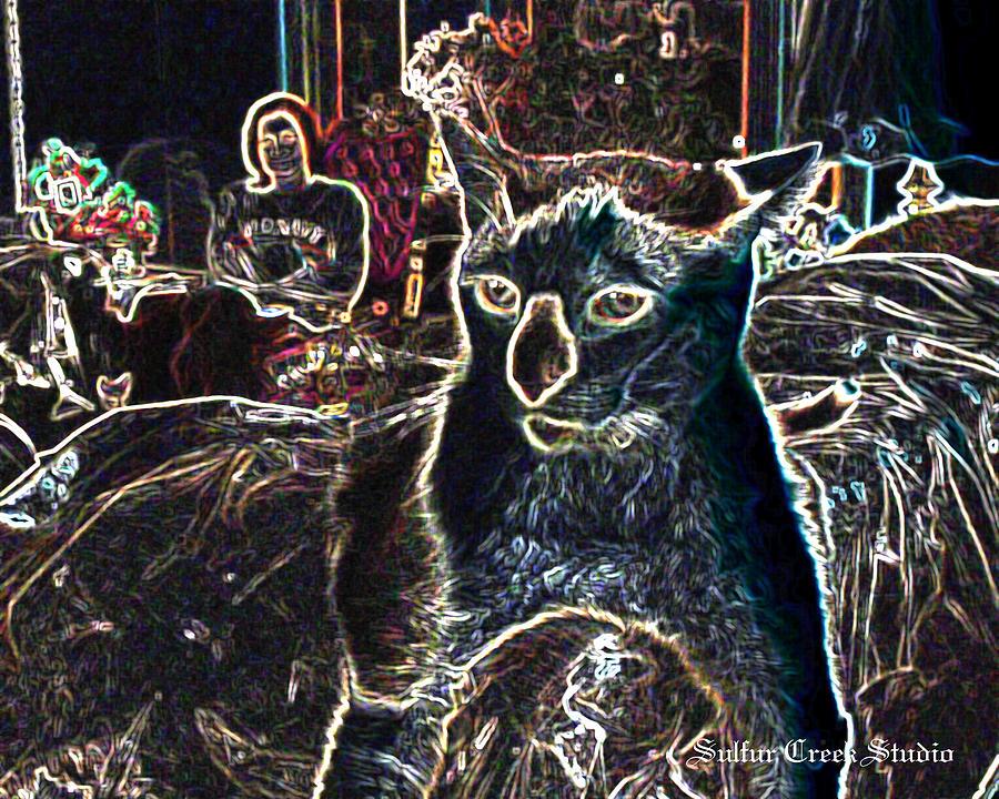 Cat Photograph - Neon Cat by Sulfur Creek Studio
