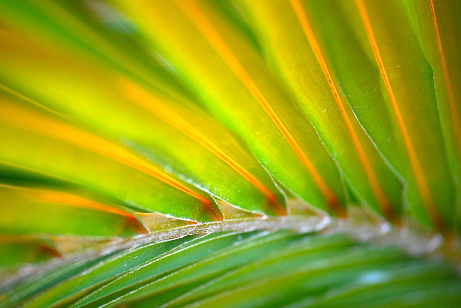 Photograph - Neon Palm by Kimberly Gonzales