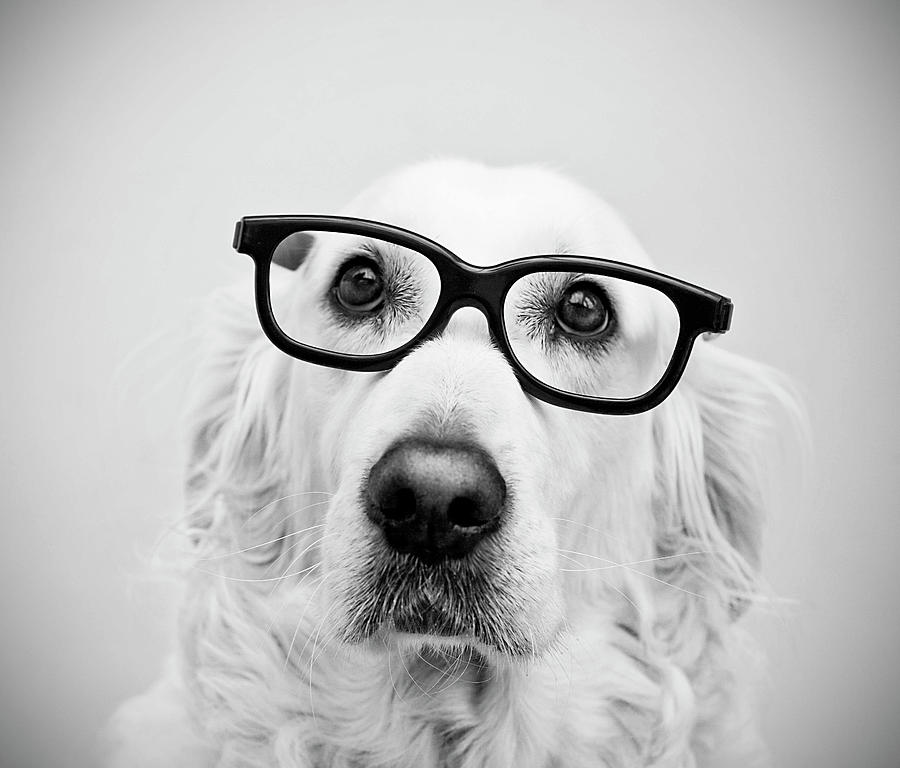 Horizontal Photograph - Nerd Dog by Thomas Hole