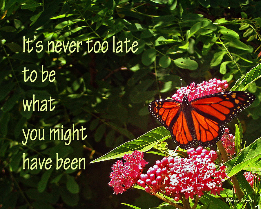 Butterfly Photograph - Never Too Late by Rebecca Samler