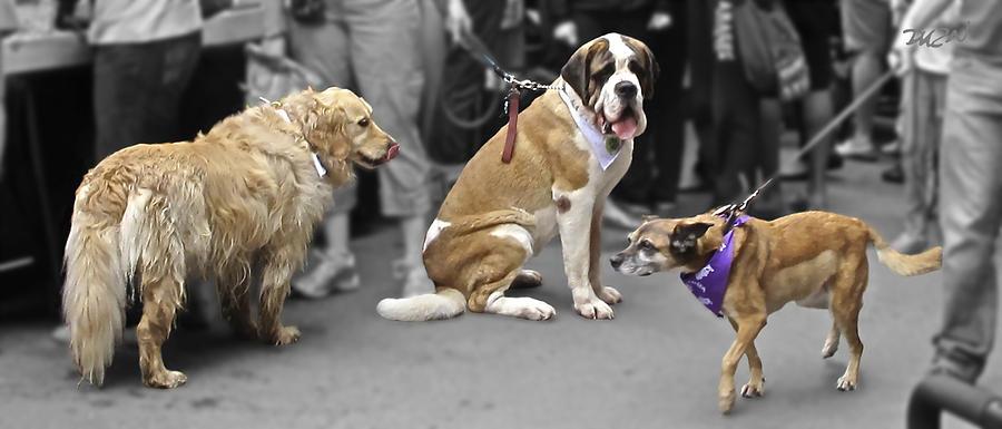 Dogs Photograph - New Bandana by Tom Dickson