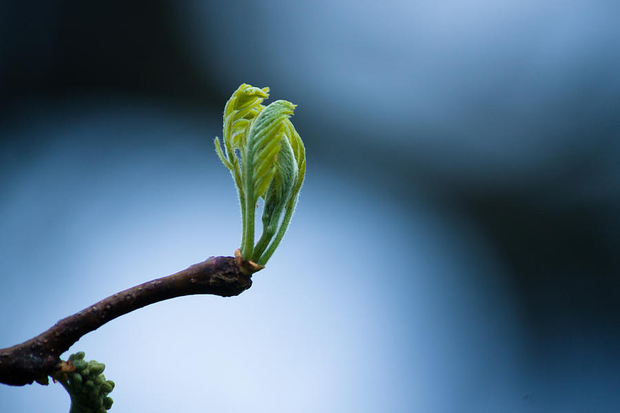Spring Photograph - New Beginnings by Daniel Chen