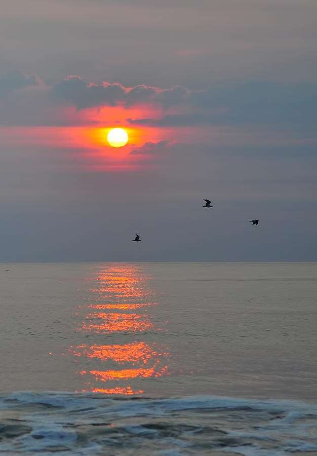 Sun Photograph - New Day by Tazz Anderson