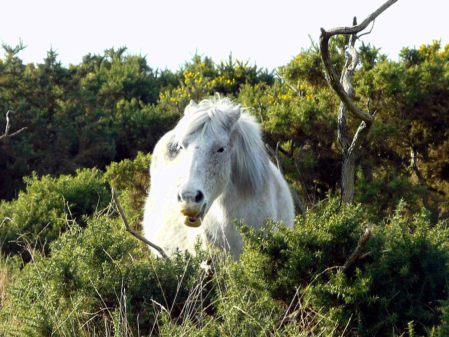 England Photograph - New Forest Pony by Rdr Creative