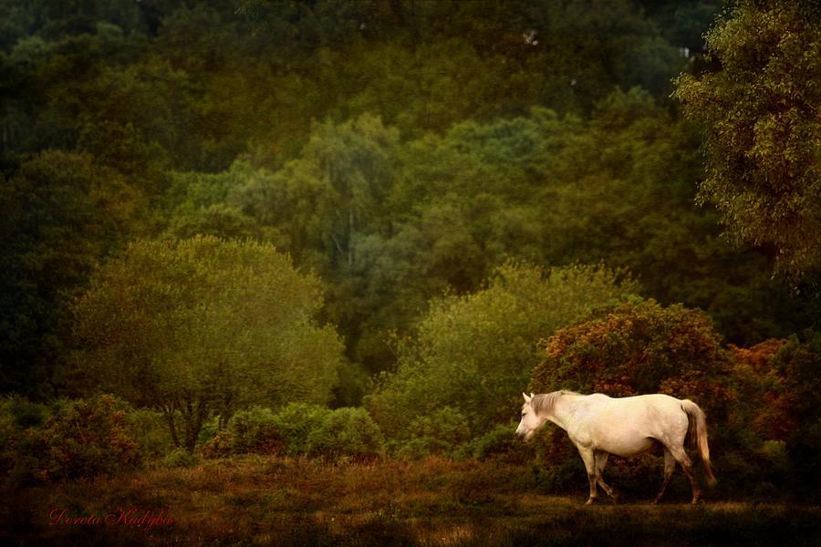 Horse Photograph - New Forest Walk by Dorota Kudyba