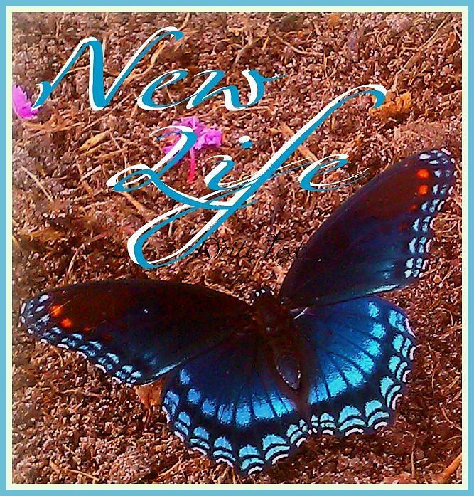 New Life Digital Art by Jessica Thomas