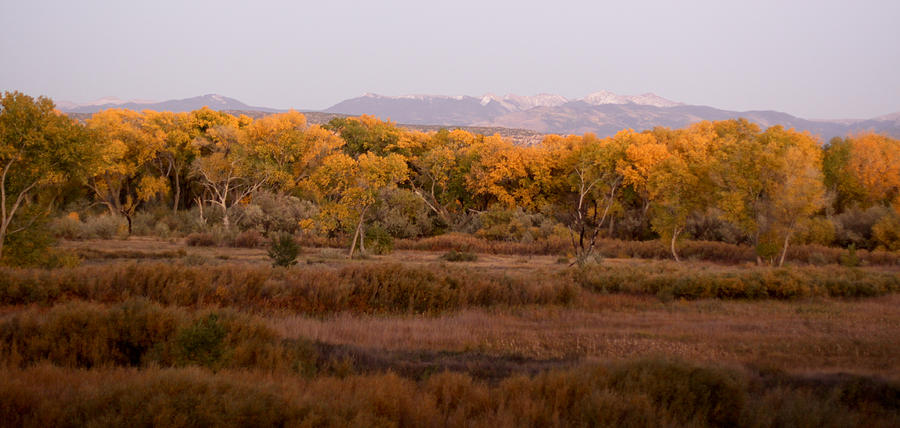 New Mexico Photograph - New Mexican Fall by Denice Breaux