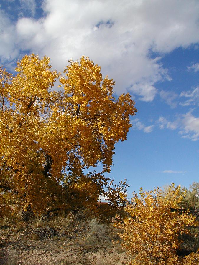 Landscape Photograph - New Mexico Series - Desert Landscape Autumn by Kathleen Grace