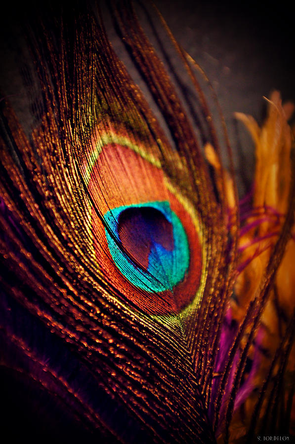 Peacock Photograph - New Orleans On My Mind by Susan Bordelon