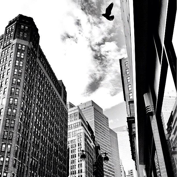 New York City Photograph - New York City - In Flight by Vivienne Gucwa