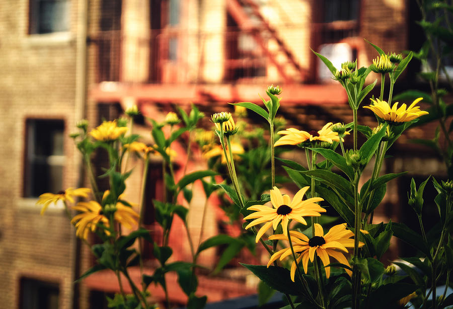 New York City Photograph - New York City Flowers Along The High Line Park by Vivienne Gucwa
