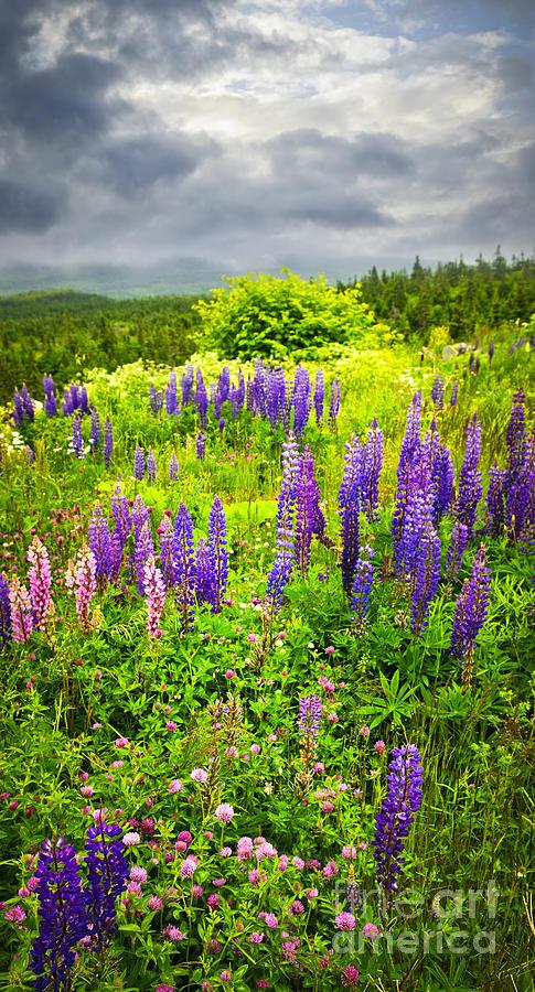 Flowers Photograph - Newfoundland Meadow by Elena Elisseeva