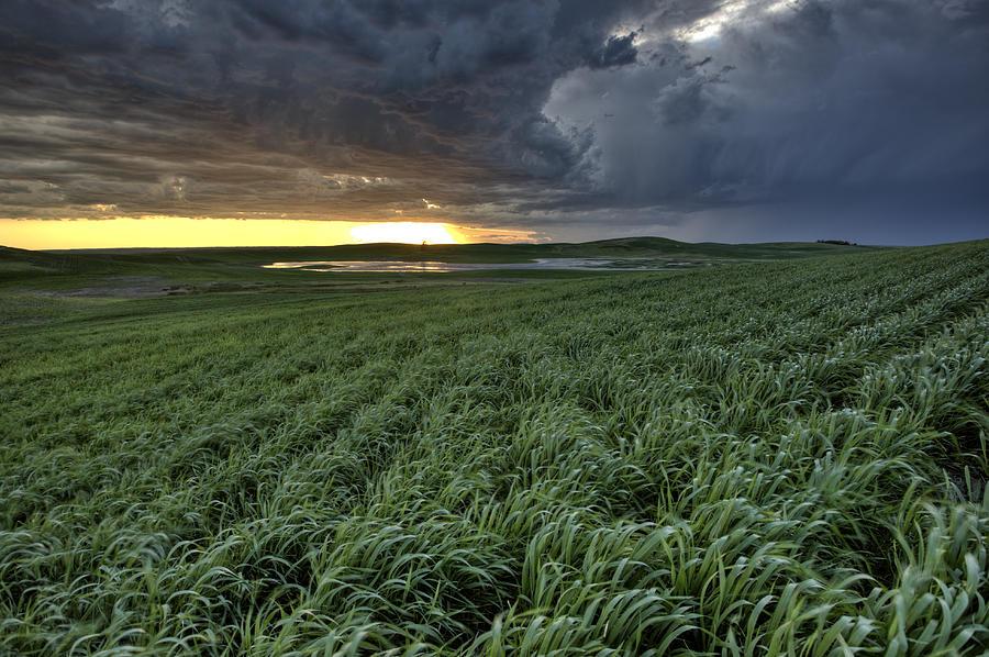 Prairie Digital Art - Newly Planted Crop by Mark Duffy