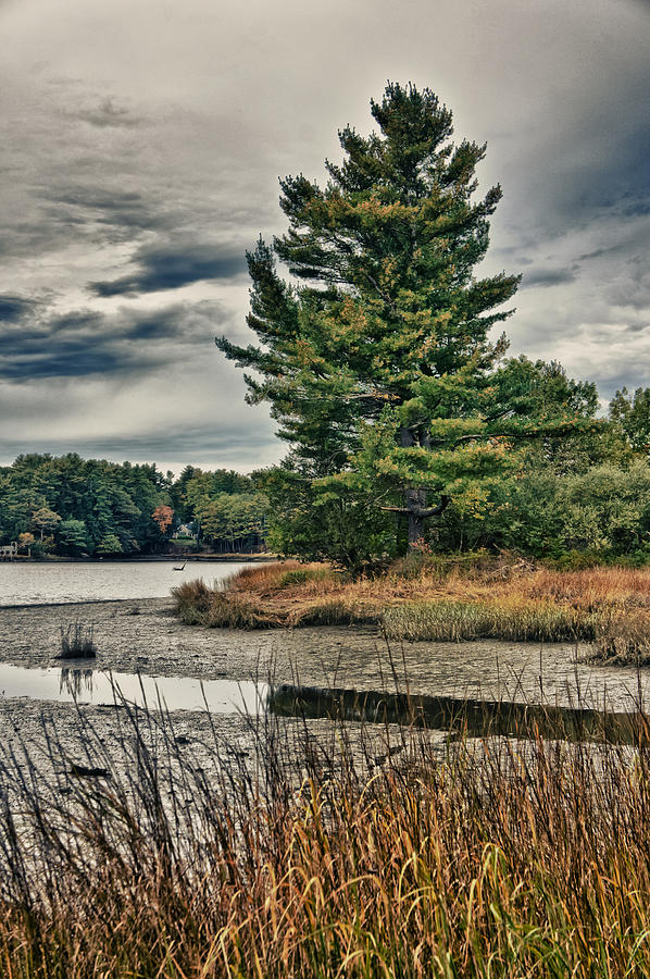 Tree Photograph - NH Waterway 3 by Edward Myers